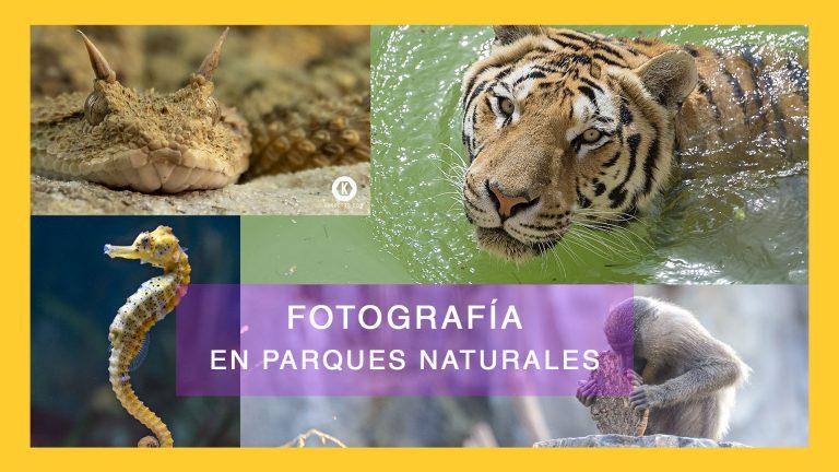 GUÍA PARA FOTOGRAFIAR ANIMALES EN PARQUES NATURALES