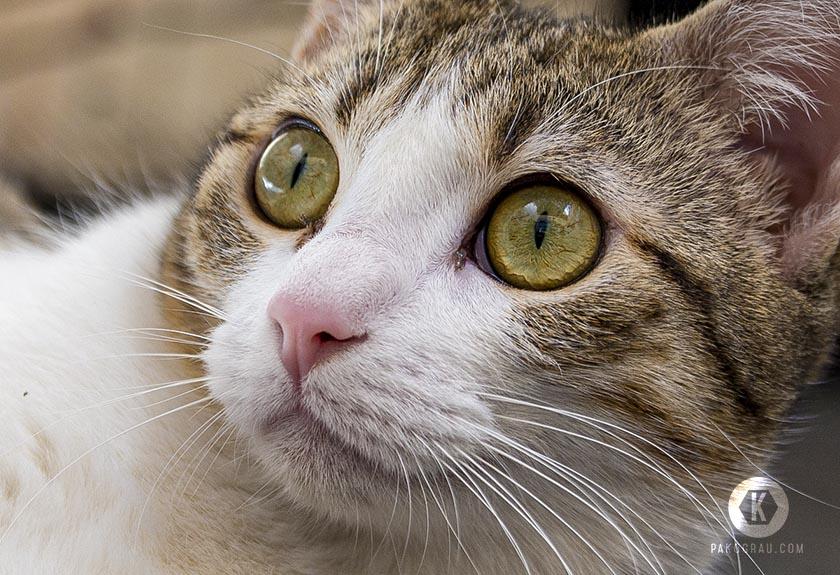 Detalle ojos de gato